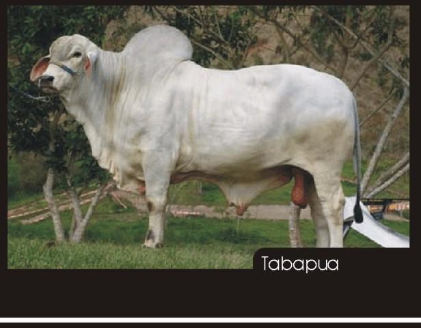 Tabapua2