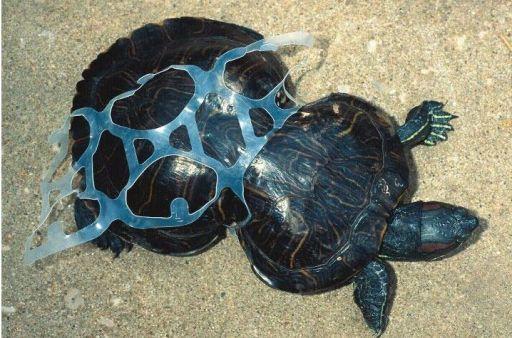 tortuga con plastico