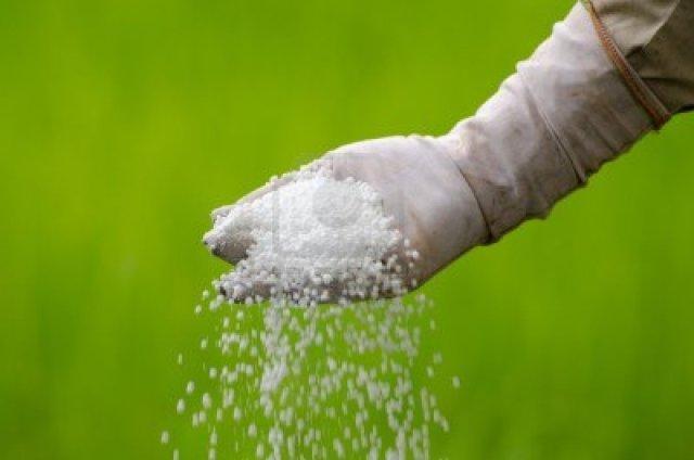 15528088-vertido-de-fertilizantes-qua-micos-con-la-mano-agricultor