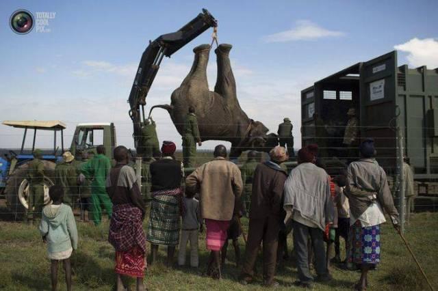moviendo-elefantes-02
