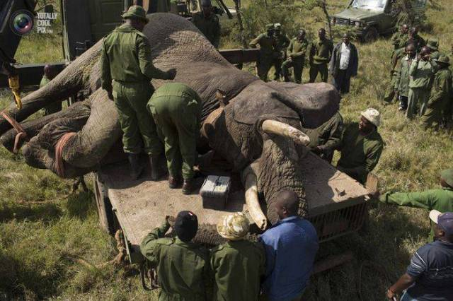 moviendo-elefantes-05