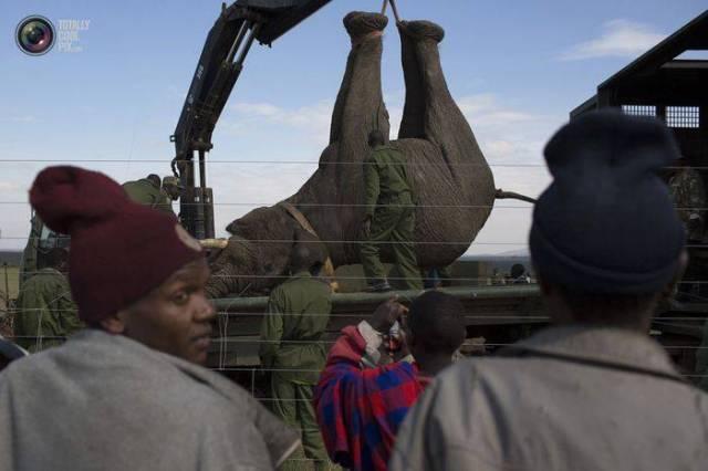 moviendo-elefantes-09