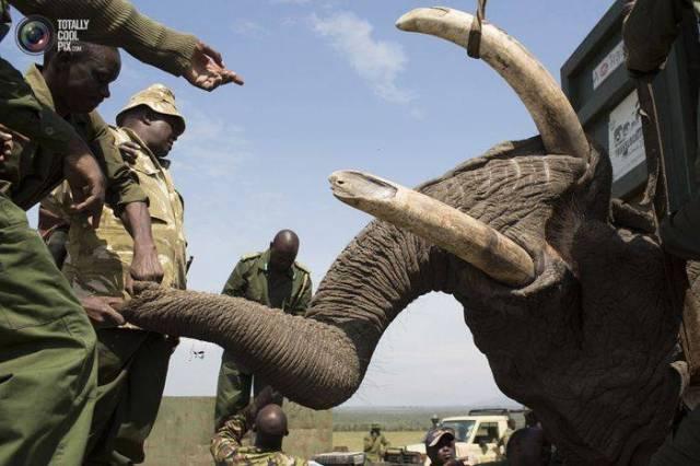 moviendo-elefantes-11