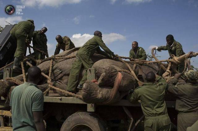 moviendo-elefantes-15