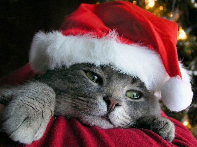 perros-navideños.jpg-5
