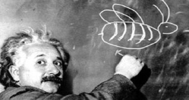 Einstein_Bee1-660x350