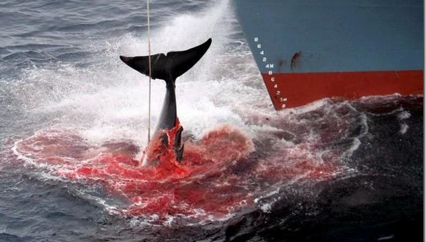 trafico-ballenas