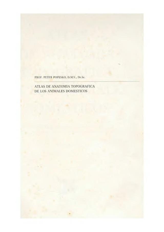 412. Atras de anatomia topografica