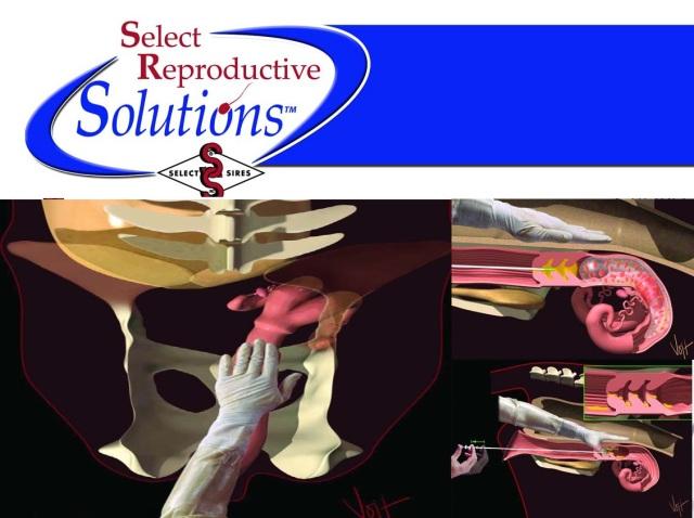 419. Inseminacion Artificial bovino - selet reprodutive