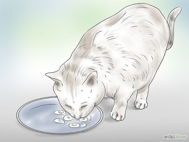 670px-Treat-a-Poisoned-Cat-Step-14