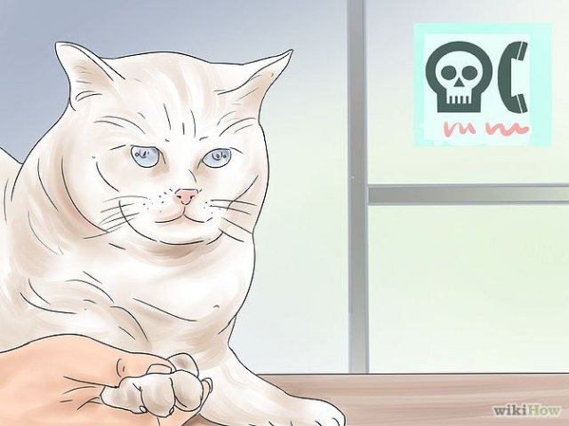 670px-Treat-a-Poisoned-Cat-Step-19