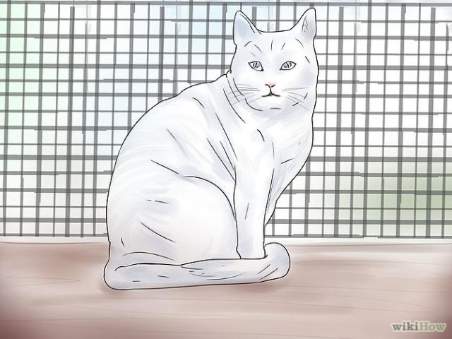 670px-Treat-a-Poisoned-Cat-Step-2