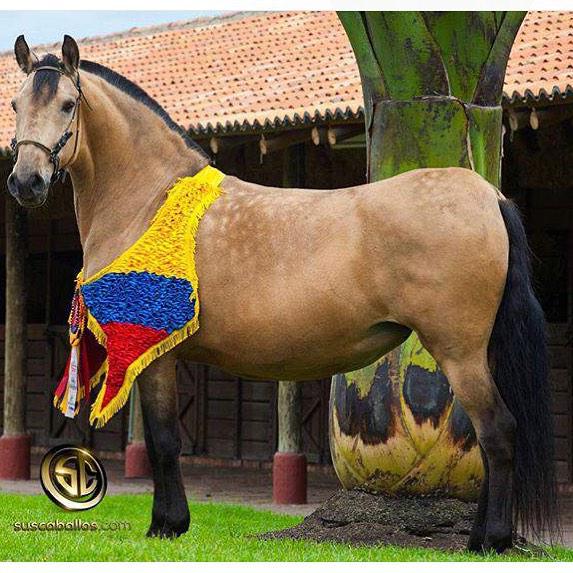 caballoscolombia-9w1_ffay6q